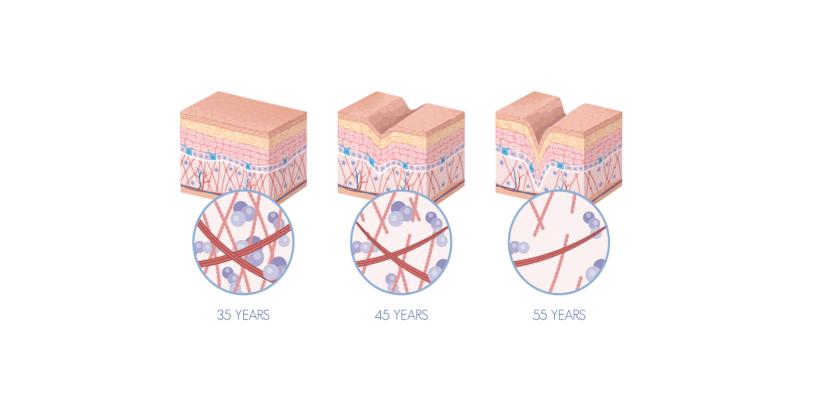 Jaylab-Pro-Collagen-Complex-collagen-decline