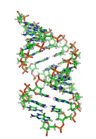 S-a descoperit un ADN uman veci de 400