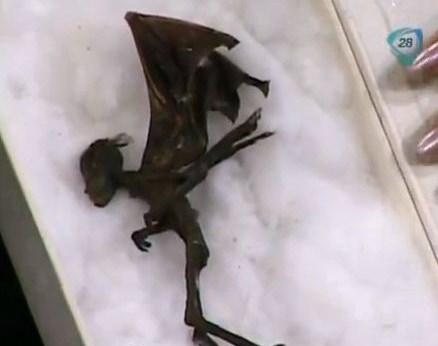S-au descoperit cadavrele unor zâne