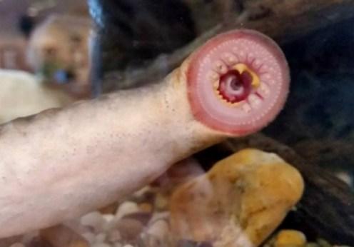 În Alaska a plouat cu peşti monstruoşi (2)