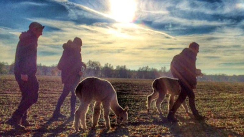 Mit Alpakas unterwegs durch Brandenburg....Bild: Nieplitzhof