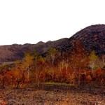 A landscape scarred by fire in Walelagama, Wamena, Asrida Elisabeth