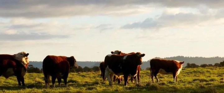 Cattle vs pets in IT security
