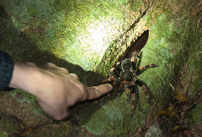 photo of tarantula spider at night