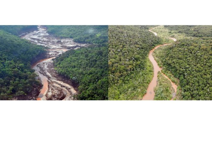 Reflorestamento de áreas atingidas em Mariana