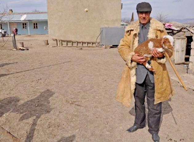 A man owning about 60 sheep (Mari Nikuradze)