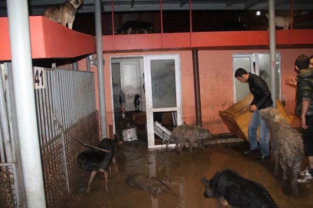 Tamaz Elizbarashvili Dog Shelter (Facebook)