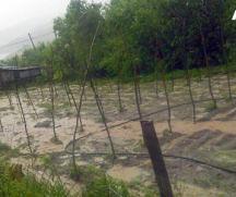flooded_vineyard