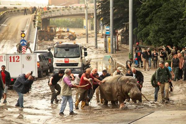 hippo_led_back_to_zoo