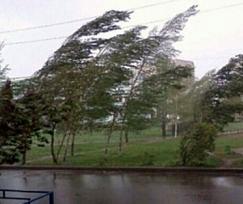 wind_trees
