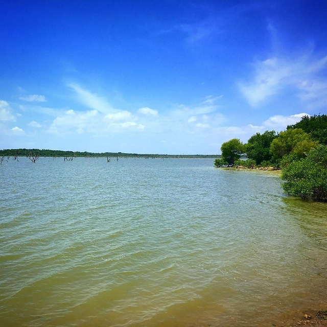 Lavon Lake in Texas from a shoreline on a summer day.