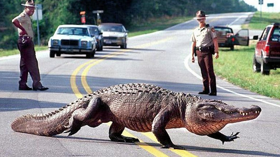 are there alligators in north texas