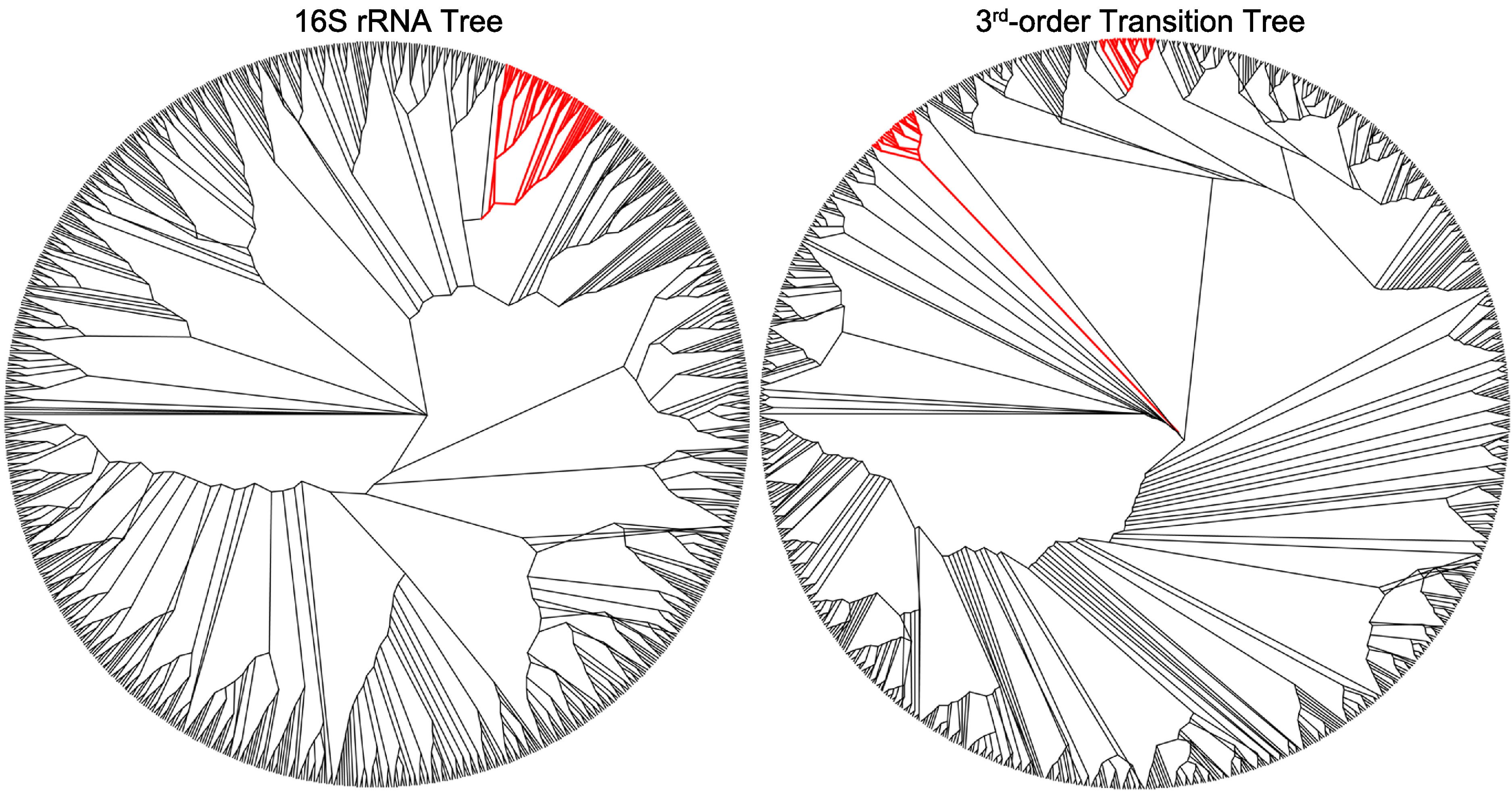 A Markovianysis Of Bacterial Genome Sequence