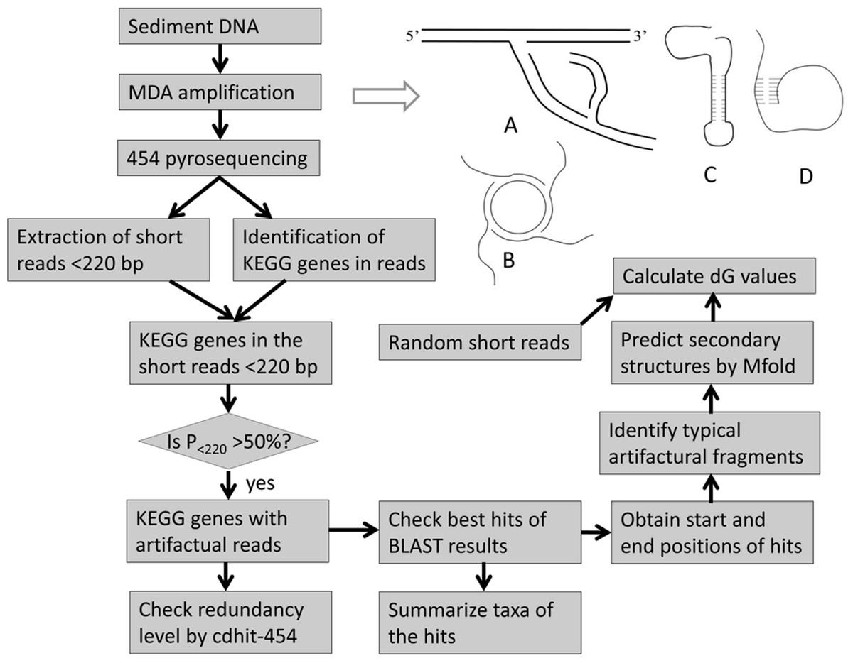 Mapping Chromosomes Laboratory Worksheet