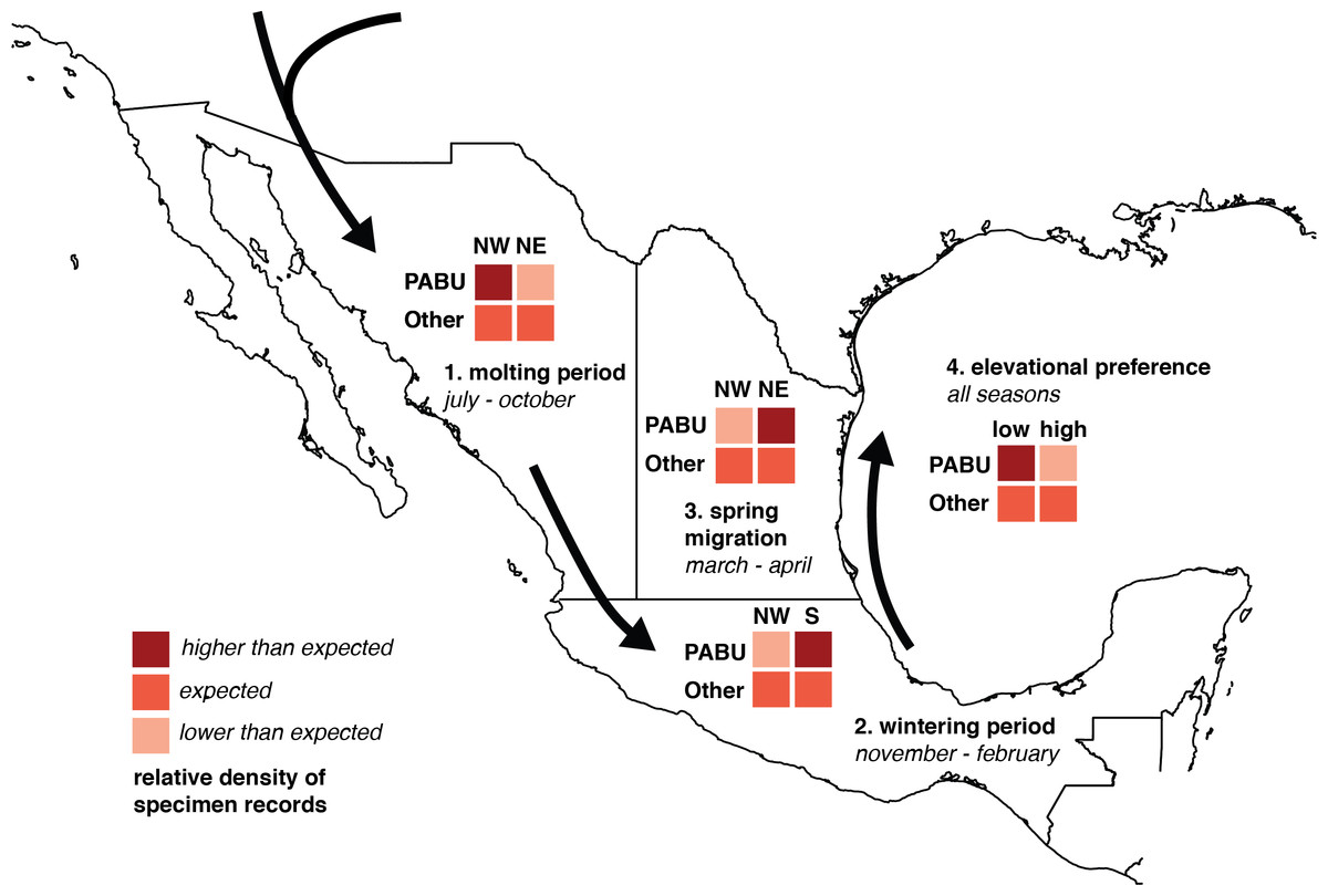 Assessing Migration Patterns In Passerina Ciris Using The