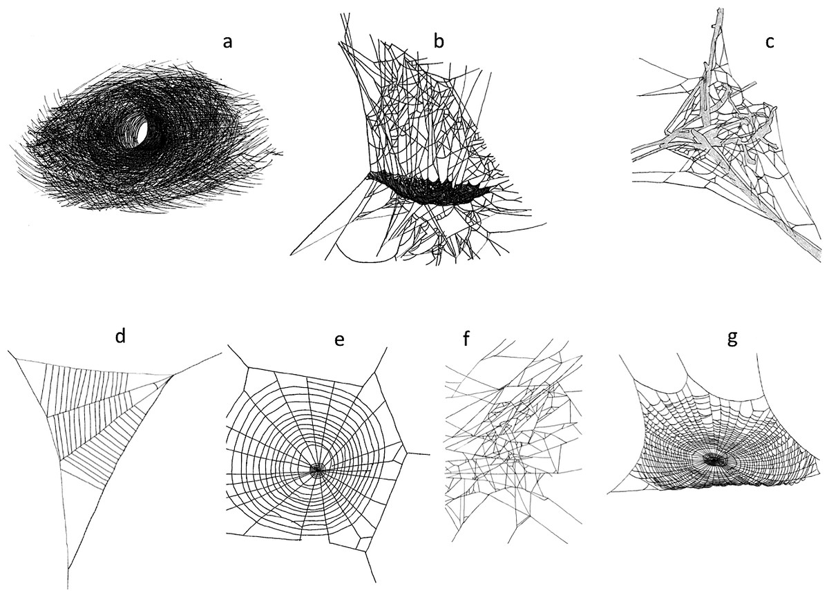 Deer Herbivory Reduces Web Building Spider Abundance By