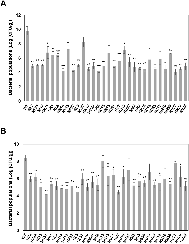 Transposon Mutagenesis Reveals Pseudomonas Cannabina Pv