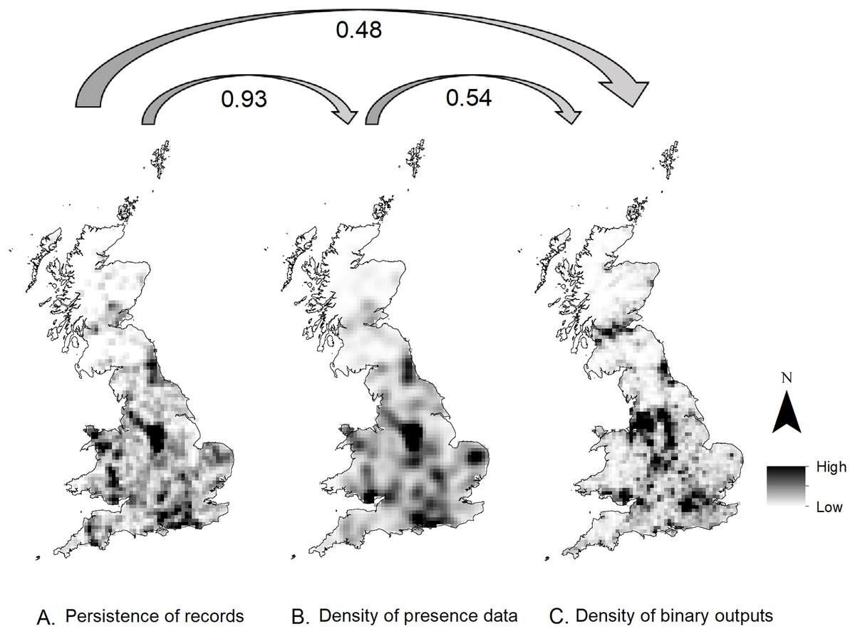 Predicting Hedgehog Mortality Risks On British Roads Using