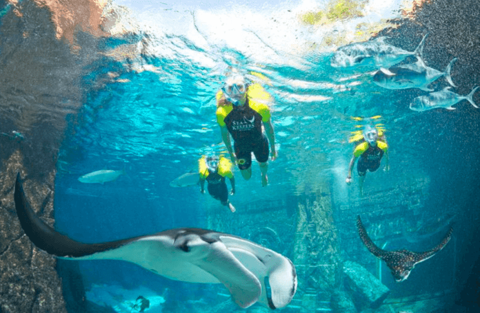 Special Report:  The Cove at Atlantis