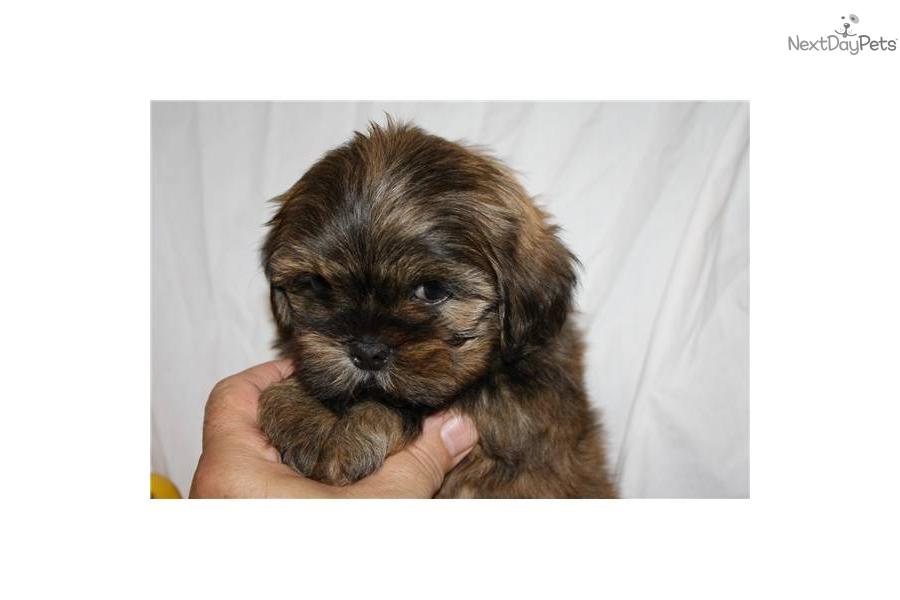 Breed Puppies Free Mix