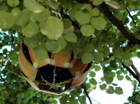 The Living Orb project In Tree