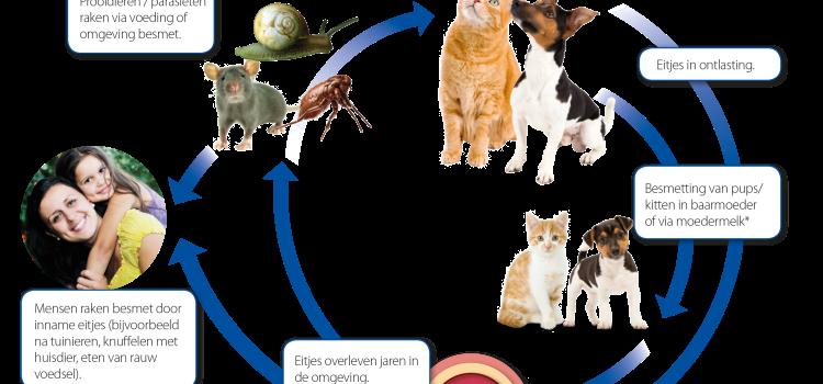 5 worm weetjes bij honden en katten