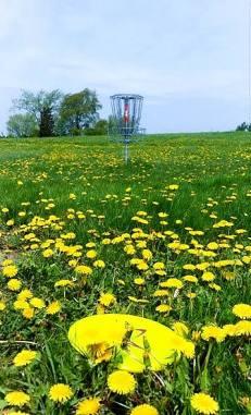 MSU Disc Golf Course field