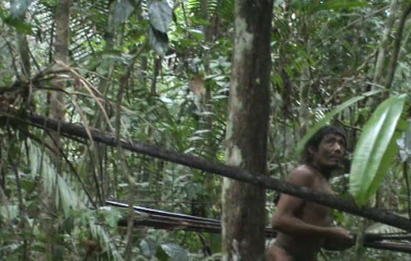 Brazil: Loggers Invade Uncontacted Kawahiva Tribe's Rainforest