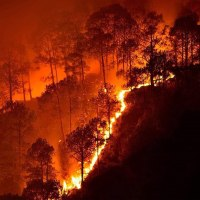 "Derrick Jensen: ""As the Amazon Burns, It's Time to Roll Up Our Sleeves"""