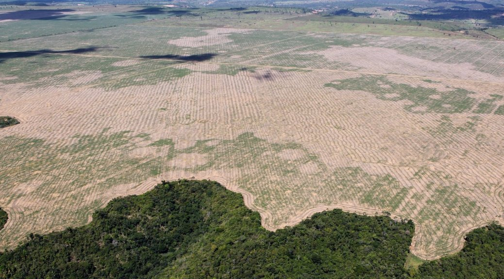 Amazon Deforestation At Highest Rate on Record