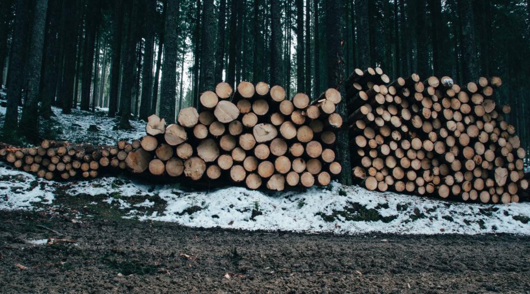 biomass logging timber forests destruction
