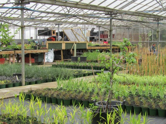 2016 DGT April Greenhouse (1)
