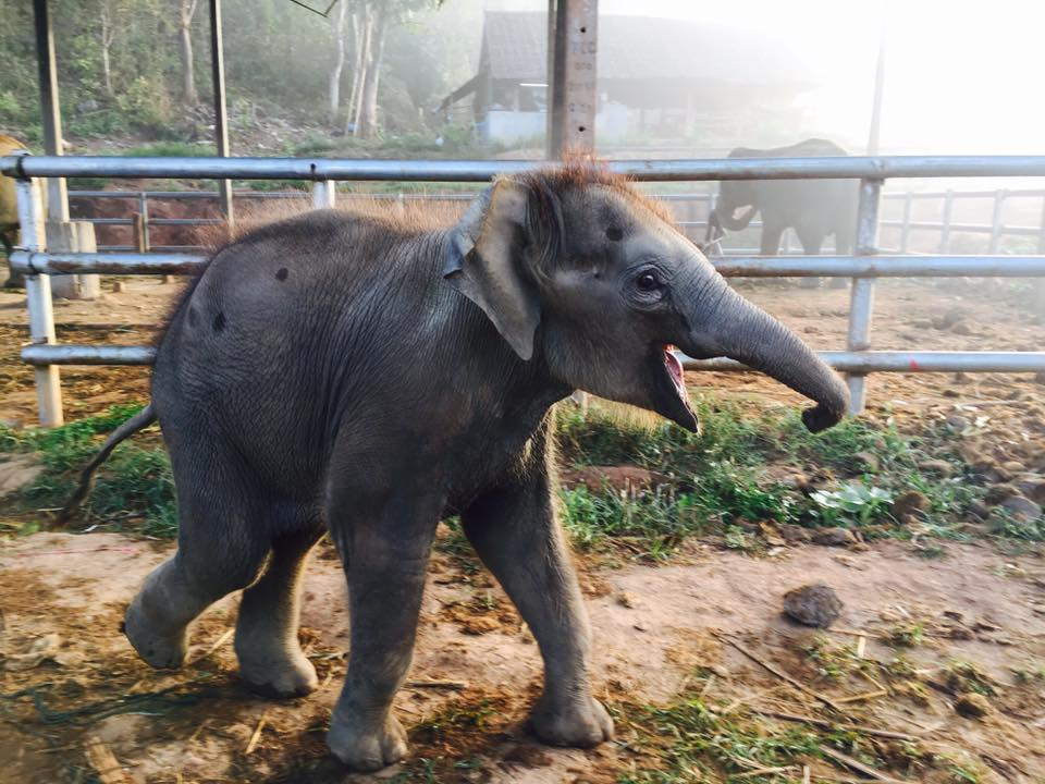 Traveling Hygienist Thailand - Happy Elephant Camp