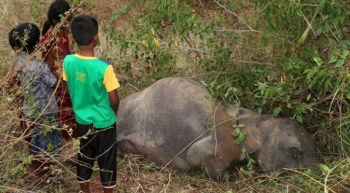 Sri-Lanka-elephant-calves