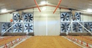 Closed House : Peternakan Modern Dengan Investasi Padat