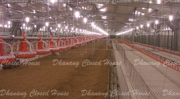 Closed House Breeding - Dhanang Closed House Properties