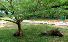 Pumbas at camp