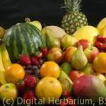 Fruit image
