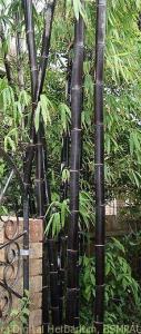 kali-bamboo