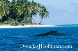 Whale in Paradise