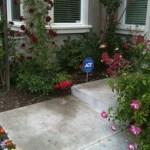 Pictures of Vegetable & Flower Garden