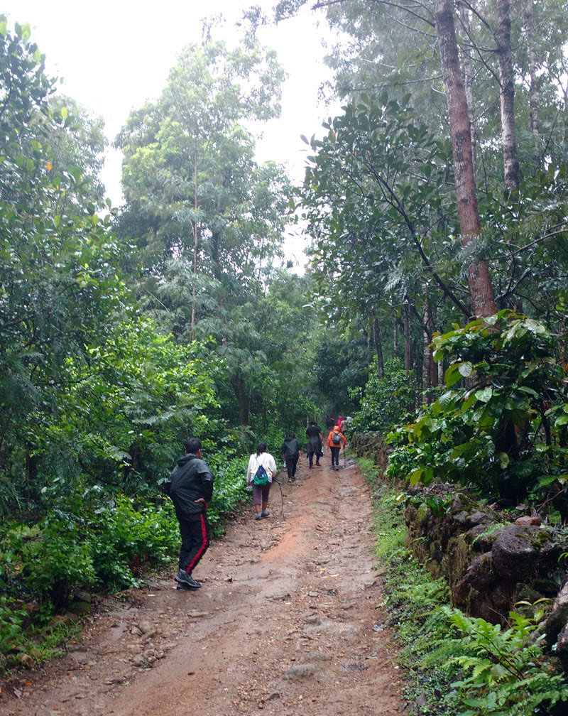 Chikmagalur Trek in the forest