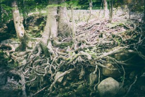 roots, river, forest