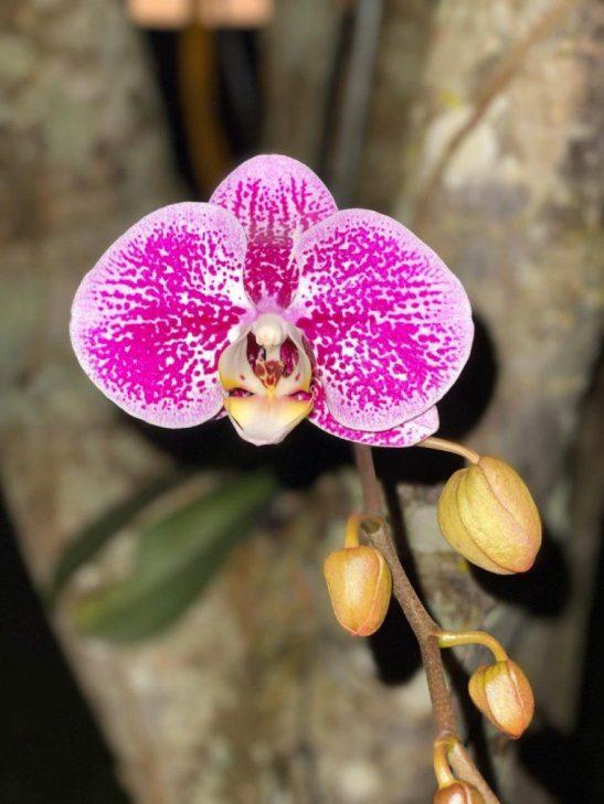 Foto do dia: beleza da orquídea de Muniz Freire