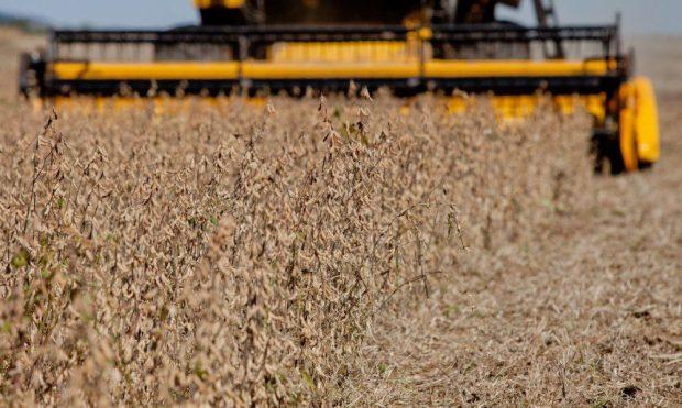 Tarifas de importação de arroz, milho e soja serão retiradas