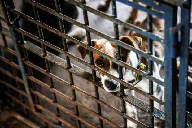 Projeto facilita denúncia de maus-tratos contra animais no Estado