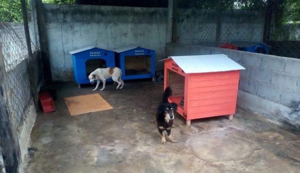 Associação doa casinhas para cães da Unidade de Vigilância de Zoonoses