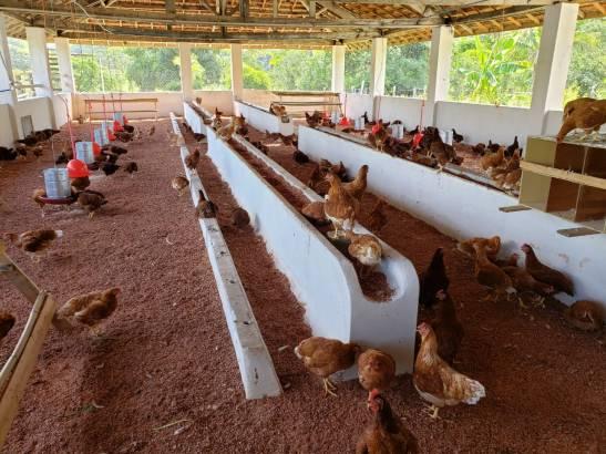 Fazenda da Santa Casa de Cachoeiro recebe doação de 145 galinhas