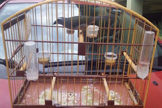 Ave silvestre é roubada, vendida e resgatada pela polícia de Mimoso do Sul