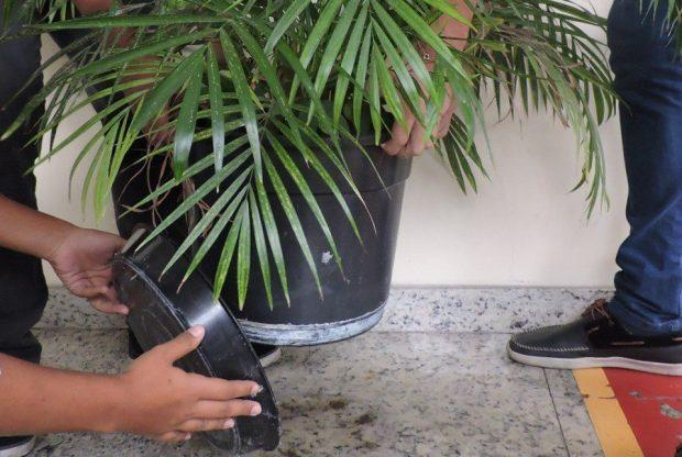 Feriado é oportunidade de eliminar criadouros do mosquito da dengue